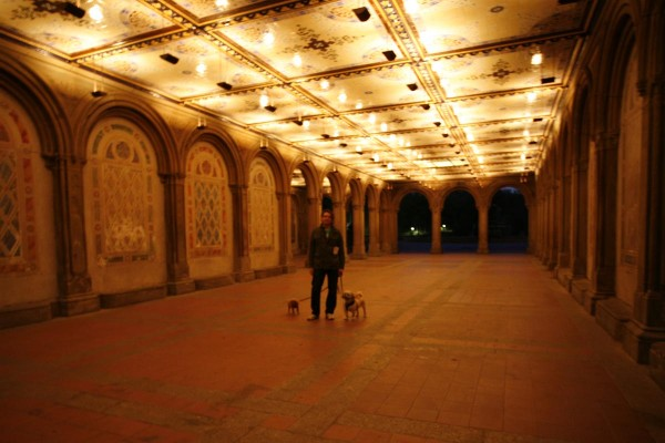 Bethesda Terrace, Central Park, with dogs